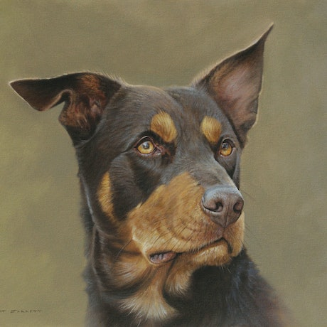 (CreativeWork) Kelpie by Brett Jarrett. Oil Paint. Shop online at Bluethumb.