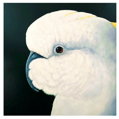 (CreativeWork) Australian Sulphur Crested Cockatoo on Dark Green Background.  by Wendy A. Greenwood. Acrylic Paint. Shop online at Bluethumb.