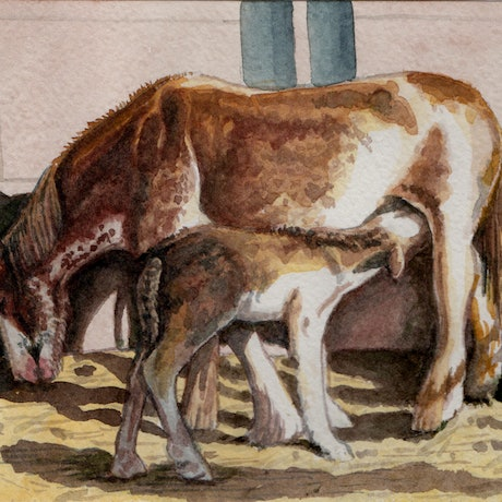 (CreativeWork) Drink at Dawn - Clydesdale Horse and Foal by Jillian Crider. Watercolour Paint. Shop online at Bluethumb.