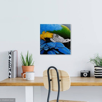 (CreativeWork) Blue and gold Macaw by Debra Dickson. Acrylic Paint. Shop online at Bluethumb.