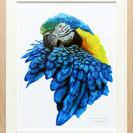 (CreativeWork) SOUTH AMERICAN BLUE AND YELLOW MACAW by Paul Margocsy. Mixed Media. Shop online at Bluethumb.