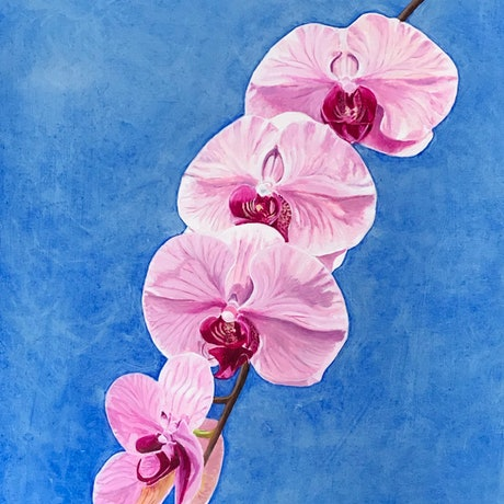 (CreativeWork) Pink Orchids (phalaenopsis) by Sylvia Barnes. Oil Paint. Shop online at Bluethumb.