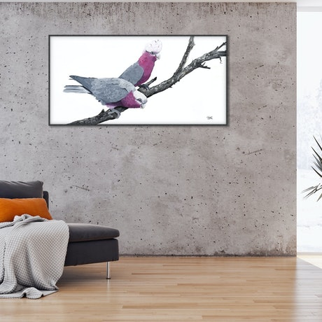 (CreativeWork) TOGETHER FOR ETERNITY –Original Painting - A pair of Galahs - by Johanna Larkin. Acrylic Paint. Shop online at Bluethumb.
