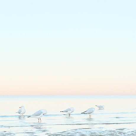 (CreativeWork) Up With The Birds, Beaumaris Beach  Ed. 2 of 22 by Liza Clements. Photograph. Shop online at Bluethumb.