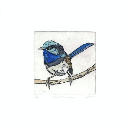 (CreativeWork) Superb Fairywren II Ed. 2 of 10 by Lydie Paton. Print. Shop online at Bluethumb.