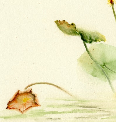(CreativeWork) Lotus flowers by Cecilia Xiao. Watercolour Paint. Shop online at Bluethumb.
