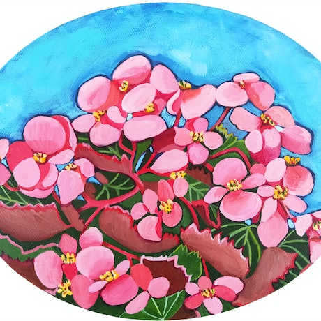Oval shaped study of begonia plant with pink flowers on blue background.