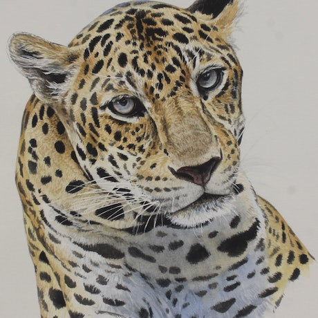 (CreativeWork) Leopard (panthera pardus) by Jason Roberts. Watercolour Paint. Shop online at Bluethumb.