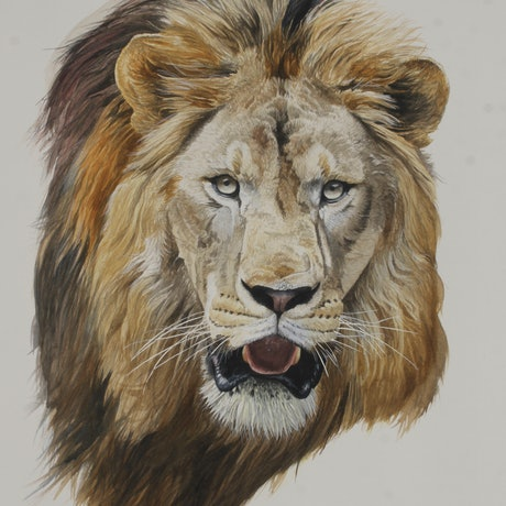 (CreativeWork) Lion (panthera leo) by Jason Roberts. Watercolour Paint. Shop online at Bluethumb.