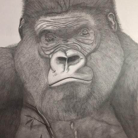 (CreativeWork) Gorilla (105 x 175 cm) by Tom Keel. Drawings. Shop online at Bluethumb.