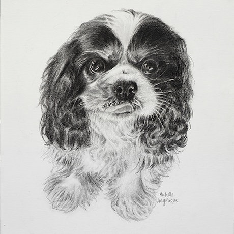(CreativeWork) Tri-colour cavalier king charles spaniel (framed) by Michelle Angelique. Drawings. Shop online at Bluethumb.