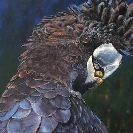 (CreativeWork) Blackie - Seeking Refuge by Andrew Smith. Acrylic Paint. Shop online at Bluethumb.