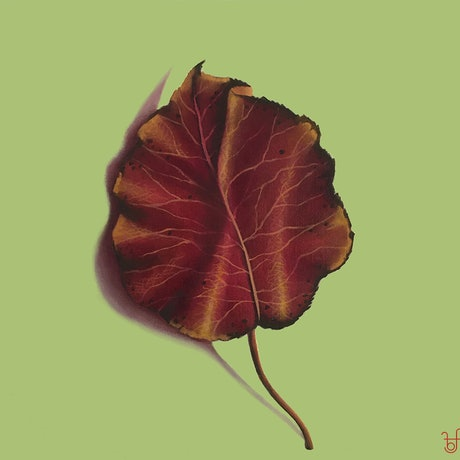 (CreativeWork) Autumn leaf on lime green by Barbara Harkness. Oil. Shop online at Bluethumb.