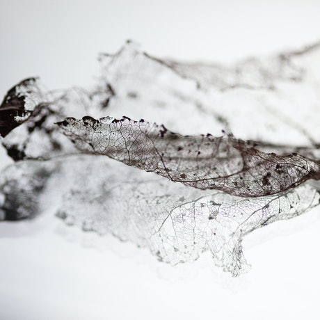 (CreativeWork) Fragility and Grace Series No6 Ed. 1 of 250 by Alison Shirley. Photograph. Shop online at Bluethumb.