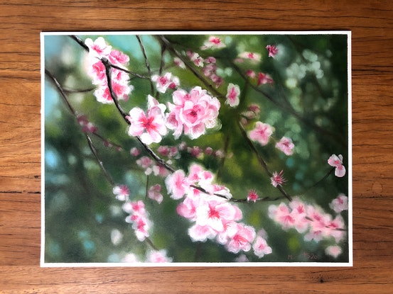 (CreativeWork) Cherry Blossom by Melissa Kenihan. Oil Paint. Shop online at Bluethumb.