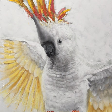 (CreativeWork) Don't call me Polly by Annie Hawkins. Oil Paint. Shop online at Bluethumb.
