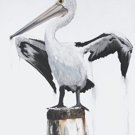 (CreativeWork) Australian Pelican Print - Drip Dry Ed. 3 of 100 by Naomi Veitch. Print. Shop online at Bluethumb.
