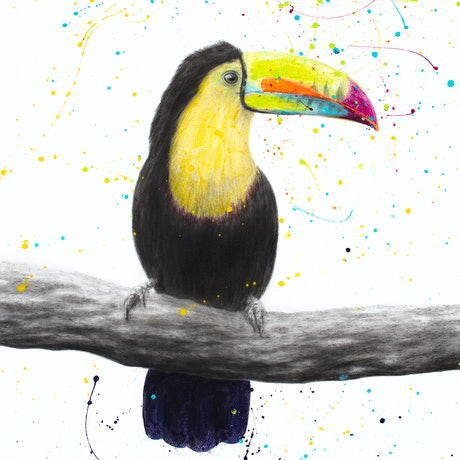 (CreativeWork) Talented Toucan  by Ashvin Harrison. Acrylic Paint. Shop online at Bluethumb.