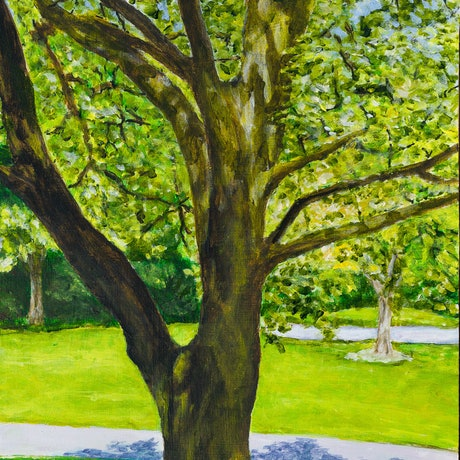 (CreativeWork) Tree in morning sun, Botanical Gardens, Geelong by Paul Burman. Acrylic Paint. Shop online at Bluethumb.