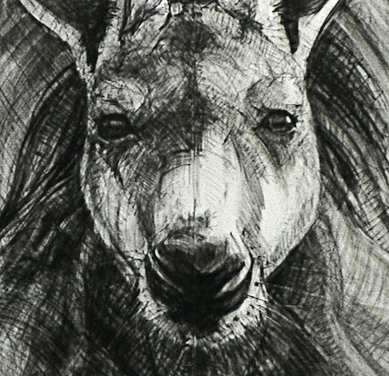 (CreativeWork) Portrait of Kangaroo No. 30 by Michael Chorney. Drawing. Shop online at Bluethumb.