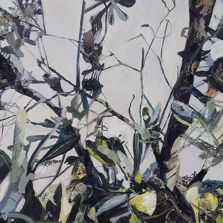 (CreativeWork) Banksia by Elizabeth Mead. Oil Paint. Shop online at Bluethumb.