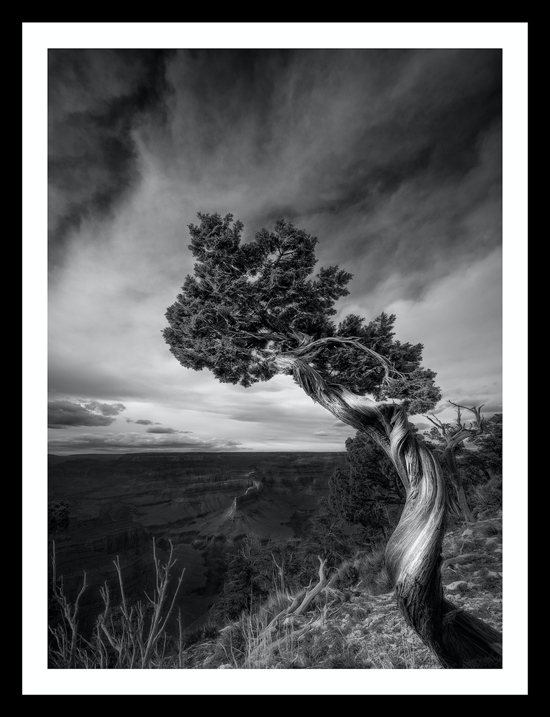 (CreativeWork) South Rim Grand Canyon Ed. 17 of 100 by Nick Psomiadis. Photograph. Shop online at Bluethumb.