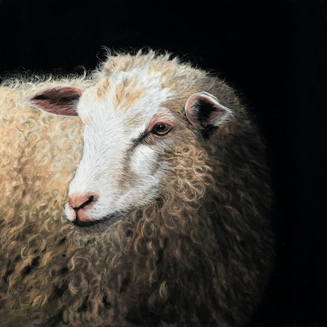 (CreativeWork) Barbra the Sheep - Original  Framed Painting  by Johanna Larkin. Other Media. Shop online at Bluethumb.