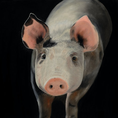 (CreativeWork) This Little Piggy - Original  Framed Painting   by Johanna Larkin. Mixed Media. Shop online at Bluethumb.