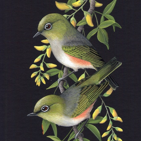 (CreativeWork) Silvereyes and Laburnum by Lyn Cooke. Watercolour Paint. Shop online at Bluethumb.