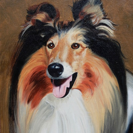 (CreativeWork) Collie Dog by Lance Ross. Oil Paint. Shop online at Bluethumb.