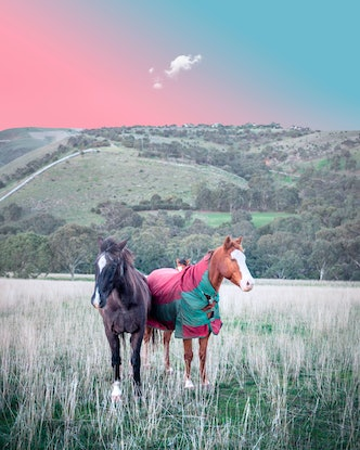 (CreativeWork) Horses Ed. 1 of 5 by Forest Harder. Photograph. Shop online at Bluethumb.