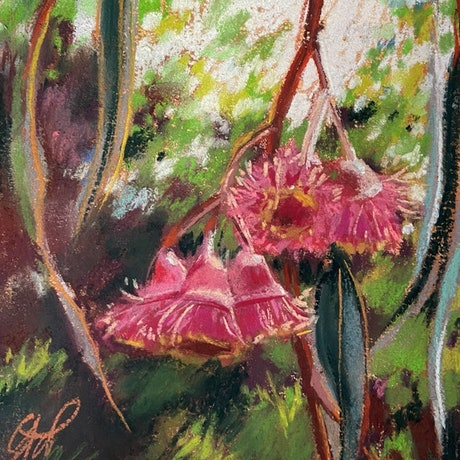 (CreativeWork) Flowering gums, warm breeze by Giulianna Del Popolo. Drawing. Shop online at Bluethumb.