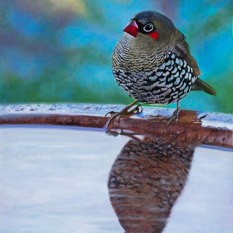 (CreativeWork) Rudy's Reflection - Red - eared Firetail Finch. by Nicky Shelton. Oil Paint. Shop online at Bluethumb.