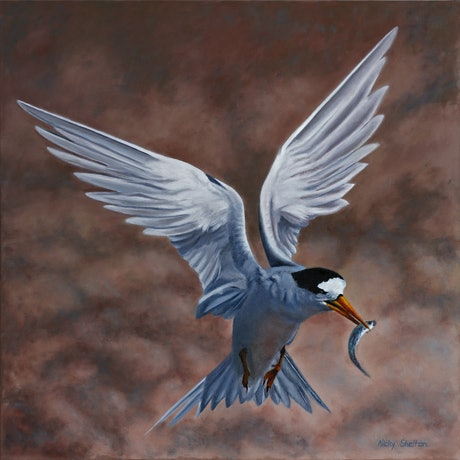 (CreativeWork) Born to Fish  - Fairy Tern by Nicky Shelton. Oil Paint. Shop online at Bluethumb.