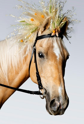 (CreativeWork) Goldie Horse Ed. 1 of 20 by GRACE COSTA. Photograph. Shop online at Bluethumb.