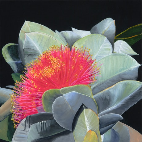 (CreativeWork) Blushing - Limited edition print on canvas Ed. 1 of 100 by Hayley Kruger. Print. Shop online at Bluethumb.