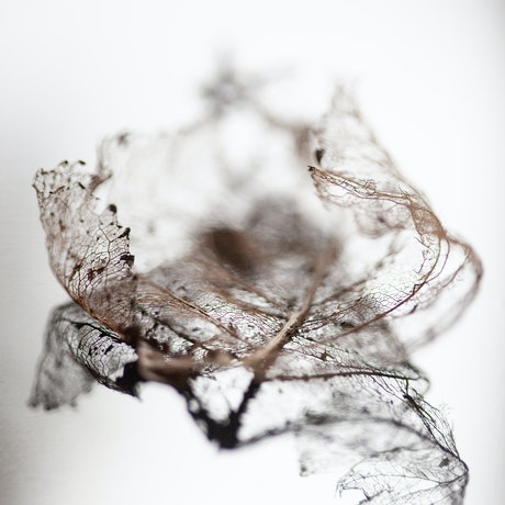 (CreativeWork) Fragility and Grace Series No7 Ed. 1 of 250 by Alison Shirley. Photograph. Shop online at Bluethumb.