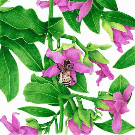 (CreativeWork) Bee on Flower by Monique Luzza. Other Media. Shop online at Bluethumb.