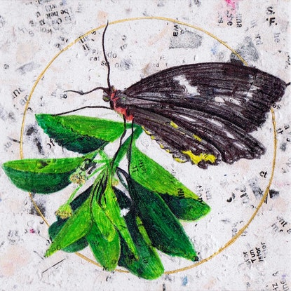 (CreativeWork) Butterfly on Leaf by Monique Luzza. Other Media. Shop online at Bluethumb.