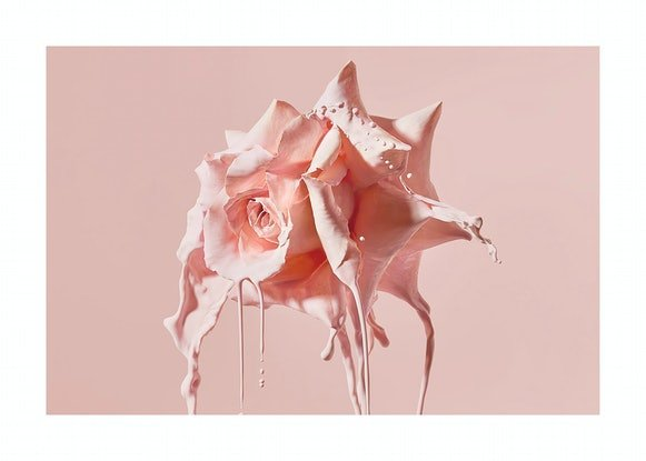 Abstract Pink Roses with Paint