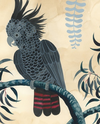 (CreativeWork) Red Tailed Black Cockatoo Forest by Sally Browne. Watercolour Paint. Shop online at Bluethumb.