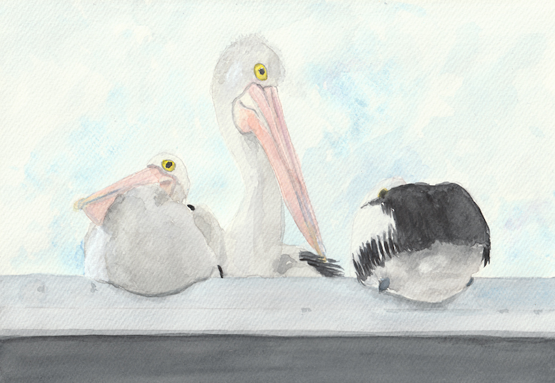 (CreativeWork) Pelicans - Fish n chip shop by Naomi Veitch. Watercolour Paint. Shop online at Bluethumb.