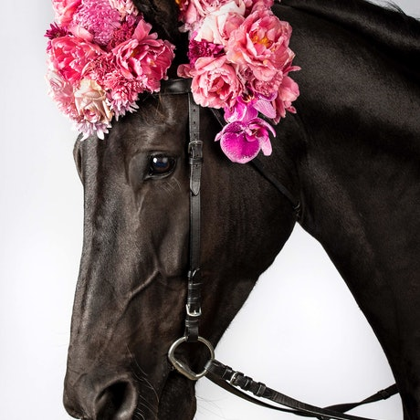 (CreativeWork) Oscar Pink Horse Ed. 1 of 20 by GRACE COSTA. Photograph. Shop online at Bluethumb.