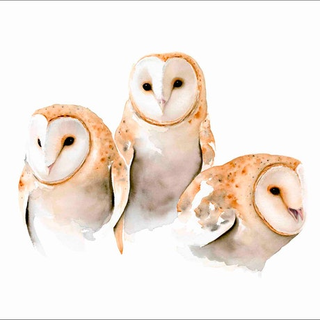 (CreativeWork) A Trio of Owls Ed. 1 of 60 by Nadine Dudek. Print. Shop online at Bluethumb.