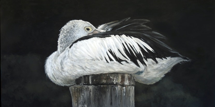 (CreativeWork) Australian Pelican Print - Percy's Post Ed. 1 of 100 by Naomi Veitch. Print. Shop online at Bluethumb.