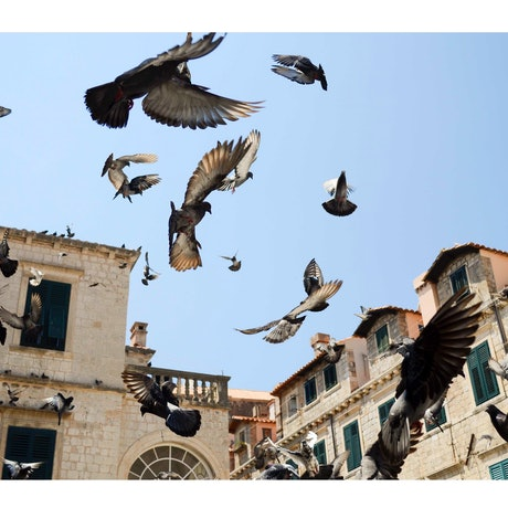 (CreativeWork) Birds of Croatia by GRACE COSTA. Photograph. Shop online at Bluethumb.