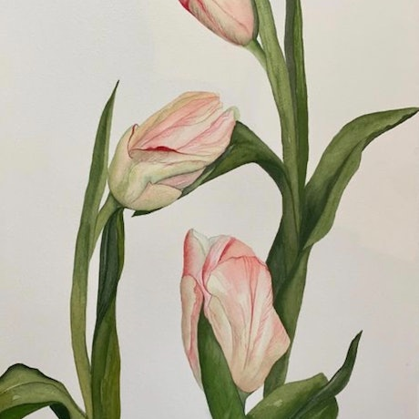 (CreativeWork) Tulips 2 by Julie Christensen. Watercolour Paint. Shop online at Bluethumb.