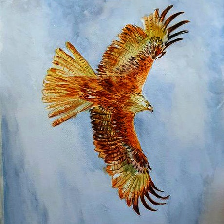 (CreativeWork) Eagle circling by Gerard Mignot. Watercolour Paint. Shop online at Bluethumb.