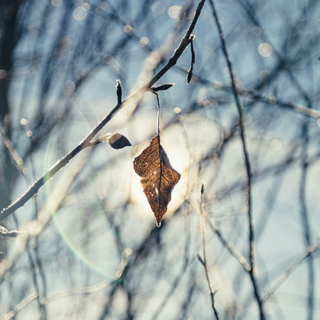 (CreativeWork) End of Fall 2 Ed. 1 of 20 by Penny Prangnell. Photograph. Shop online at Bluethumb.