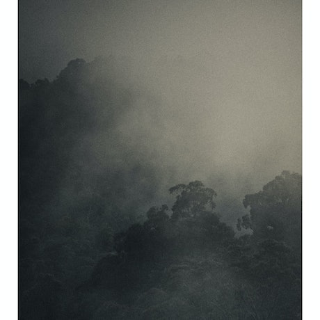 (CreativeWork) Forest Calling Ed. 1 of 7 by Brent Lukey. Photograph. Shop online at Bluethumb.